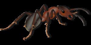 Ant Control Sacramento CA