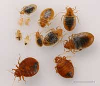Bed Bug Control In Sacramento CA Can Be A Very Stressful Job For A  Homeowner Or A Business Owner. Have A Exterminator Remove The Bed Bugs For  Full Control.
