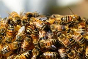 Bee Removal Sacramento CA
