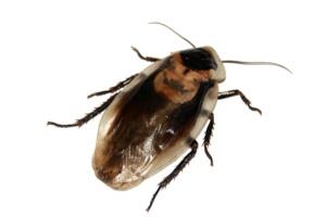 Roach Exterminator Sacramento CA