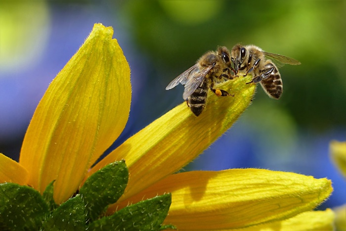 Bee Removal Cost in Elk Grove California