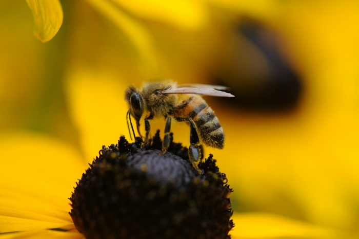Bee & Wasp Control