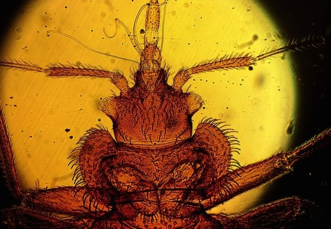 bed-bugs Sacramento CA
